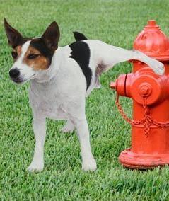 dog-fire-hydrant-11-14-11-1